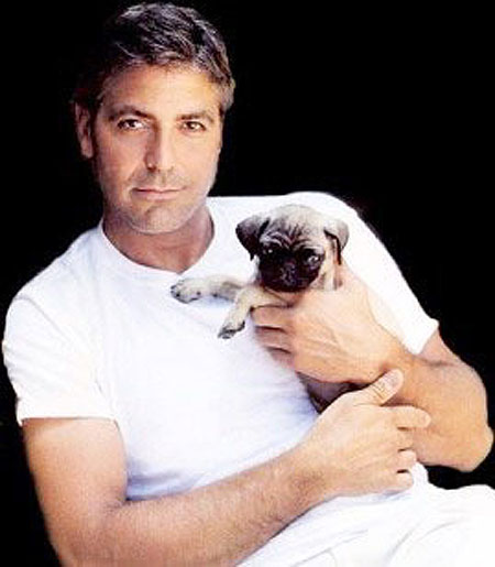 Georgeclooney with pug