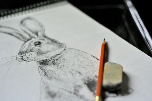 Bunny sketch suzanne carillo