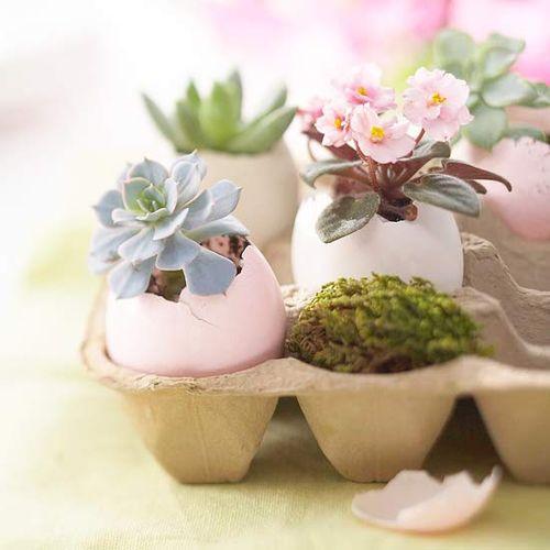 Easter planter in eggs