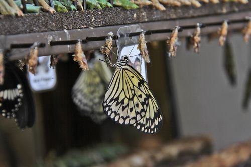 Butterfly drying